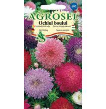 Őszirózsa vetőmag teltvirágú színkeverék 1 g